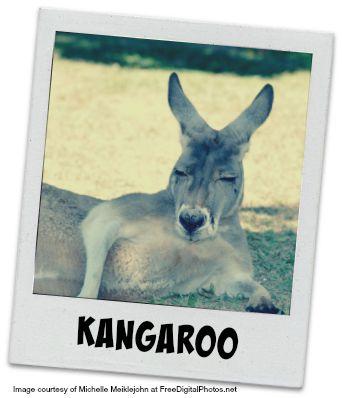 Kangaroo #1
