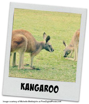 Kangaroos #2